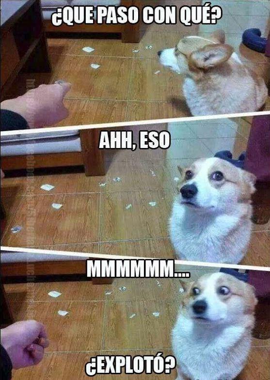 Pregúntale a tu perro...