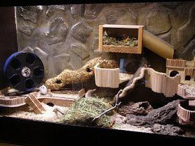 Man beachte die Größe des Zwerghamsters (links vor dem Laufrad) im Vergleich zum Terrarium / Note the size of the dwarf hamster (left side,...