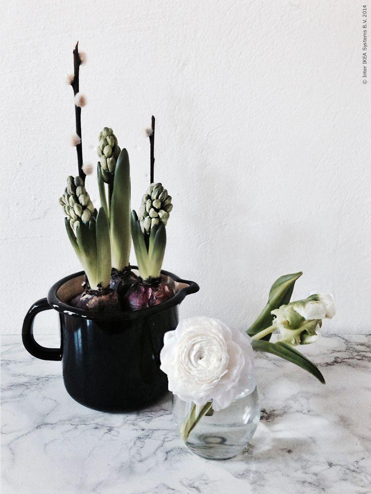 Hyacinter i RYSSBY tillbringare i emalj, ranunkel och papegojtulpan i IVRIG glas. Gästbloggare Frida Eklund Edman, för Livet Hemma.