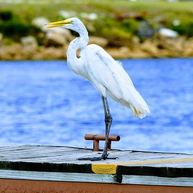 Sailboatlif Turkpost