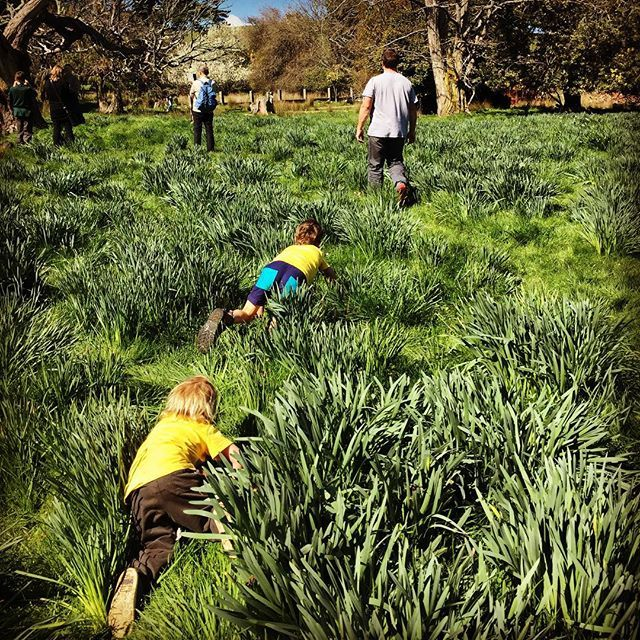 Our Freedom Kids in the daffodil fields
