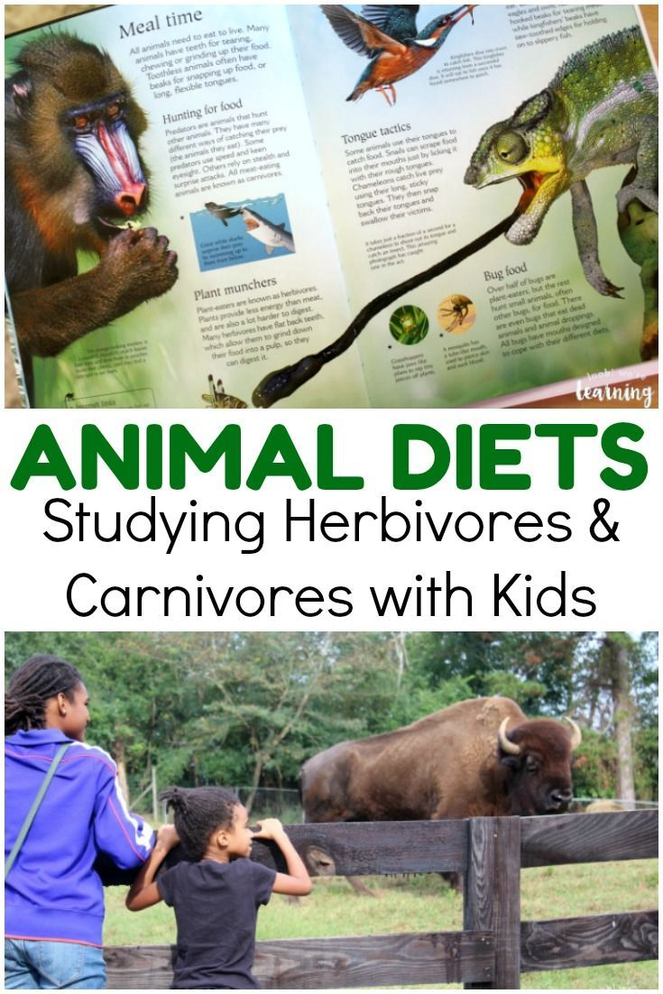 Learning About Animal Diets With Kids Look We Re Learning Animal Science Lessons Homeschool Science Animal Science