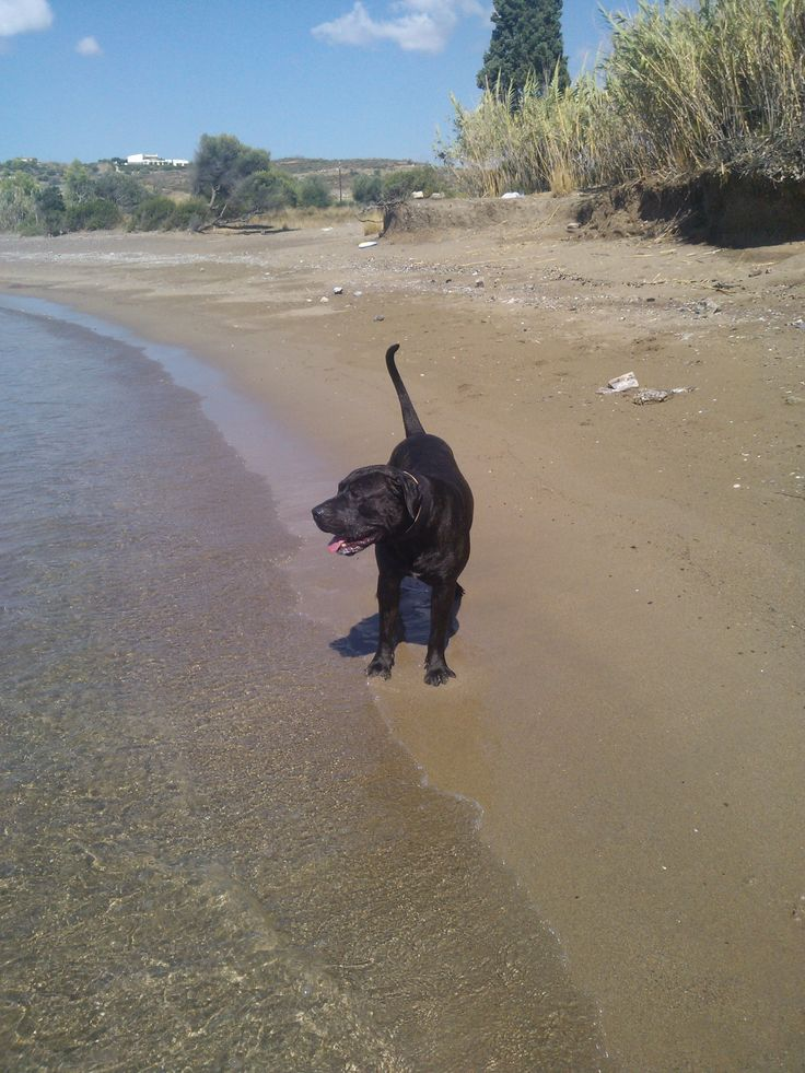 This is Vito's first day at the beach
