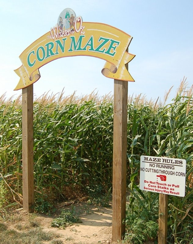 Get lost in a corn maze (together).