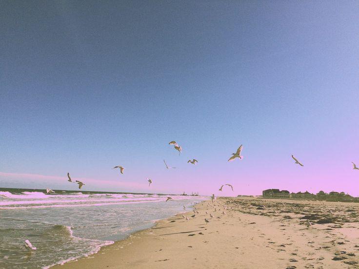 Birds.Beach.Lookslikefilm #summer