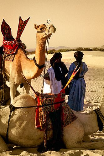 Dromedarios cargando sillas de montar de artesania tuareg, Festival au Dessert