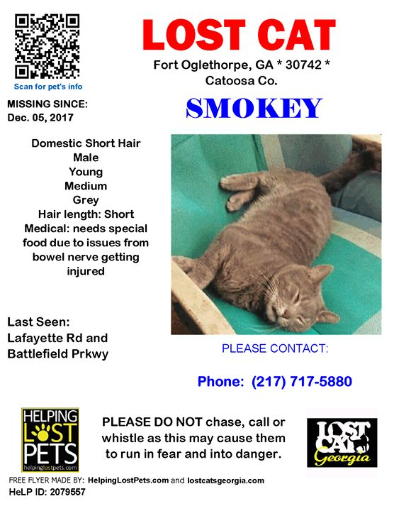 Lost Cat - Fort Oglethorpe GA - Dec.05 2017 Closest Intersection: Lafayette Rd and Battlefield Pkwy County: Catoosa #Medical Note:  Needs special food due to issues from bowel nerve getting injured  #LOSTCAT #Smokey #FortOglethorpe (Lafayette Rd & Battlefield Prkwy)  #GA 30742 #Catoosa Co.  #Cat 12-05-2017! Male #Domestic Short Hair Grey/His tail drags he can not move it due to nerve damage.  CONTACT  Phone: (217) 717-5880  More Info Photos and to Contact: http://ift.tt/2imYis3  To see this…