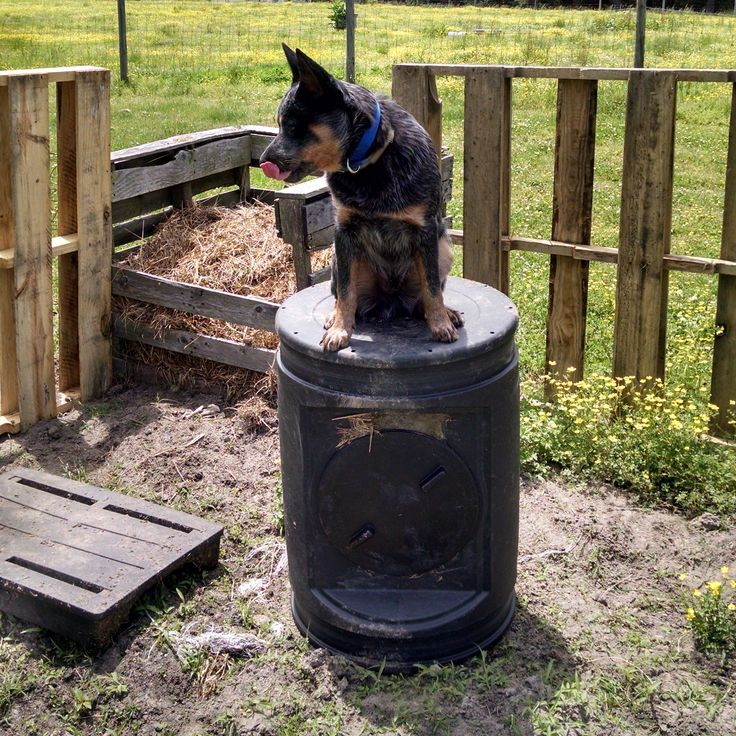 The Roof Incident...Life with Coal the Cattle Dog