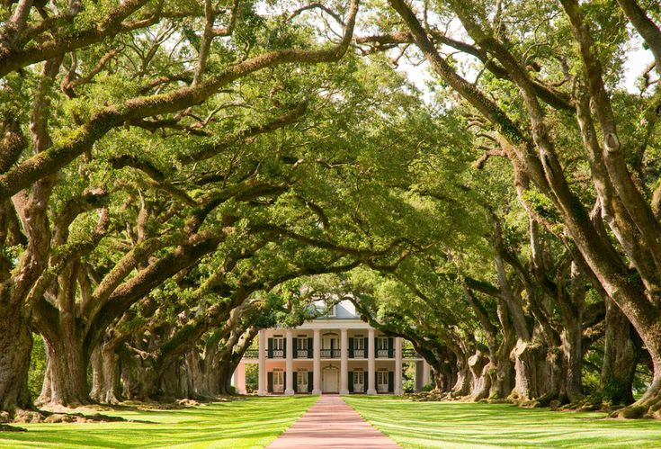 Oak Alley in Louisiana, United States | 13 Enchanting Tree Tunnels You Need To Walk Through