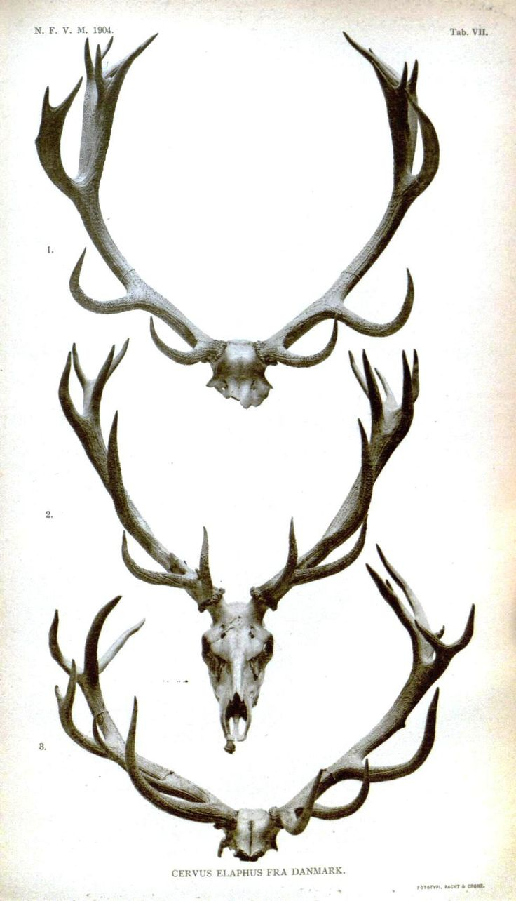 best 25 reindeer antlers ideas on pinterest frozen reindeer
