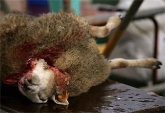 stop dierenmishandeling!