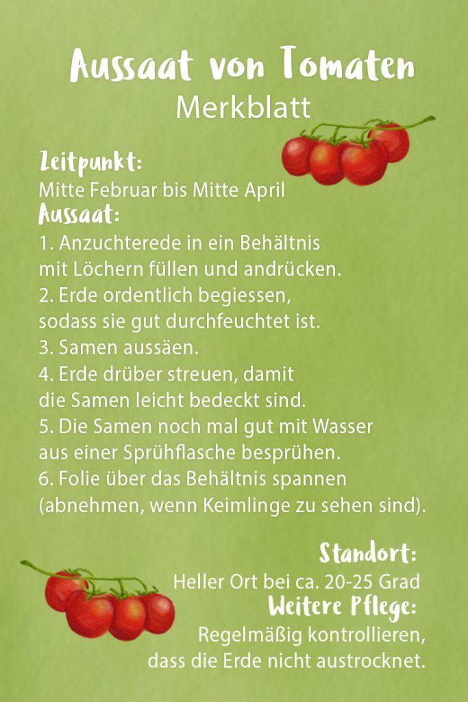 Tomaten Aussaen So Gelingt Die Aussaat Von Tomaten Plant Happy Tomaten Garten Tomaten Spargel Pflanzen