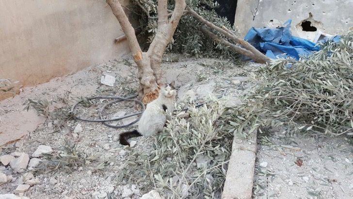 El refugio para gatos abandonados en Siria ha sido gravemente bombardeado