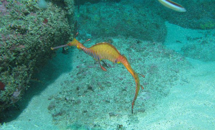 Escape your landlubbing worries under the sea.