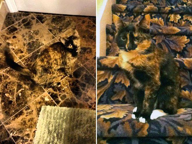 My cat Ninja – 15 Pics