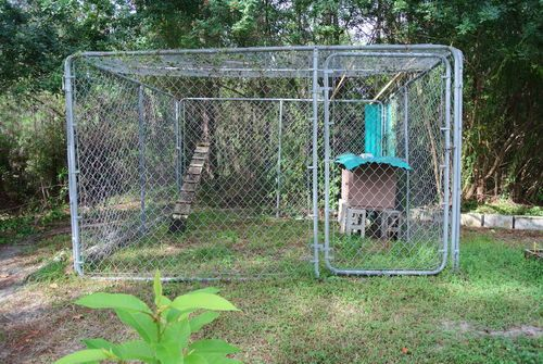 10x10 dog kennel as open coop tips