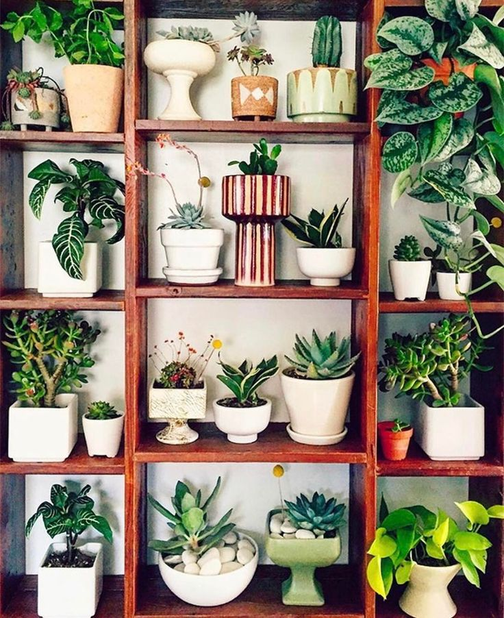 "3,427 Likes, 40 Comments - Justina Blakeney (@justinablakeney) on Instagram: ""Y'all know how I feel about plants, and finding the right planter is a huge part of the magic.…"""