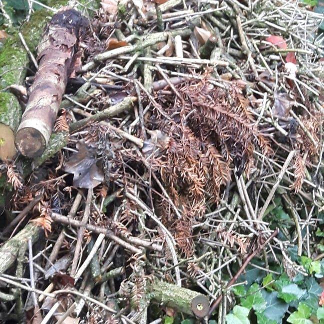Zumindest Die Rander Des Gartens Durfen Wilder Sein Totholzhaufen Mit Ast Und Zweigresten Laubhaufen An Einigen Stellen Und Garten Design Gartentipps Garten