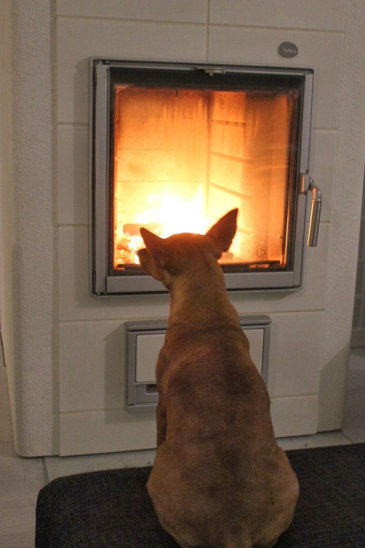#tulikivi #fireplace #fire #dog