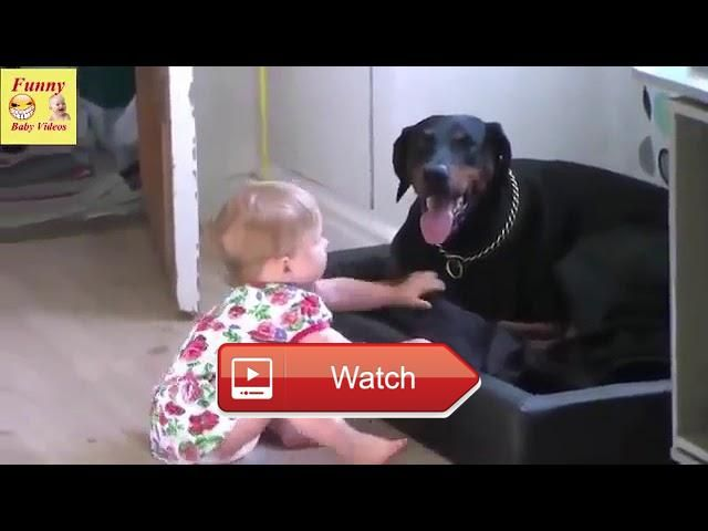 Cute Babies Annoying Cats And Dogs Video  Cute Babies Annoying Cats And Dogs Video  on Pet Lovers