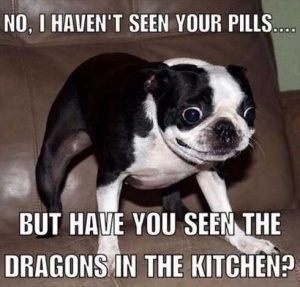 Hilarious Pictures And Memes Of Kids Dogs And Cats 015 Www Facttoss Com Dogsfunnyvideos Funny Animal Jokes Funny Dog Memes Funny Animal Quotes
