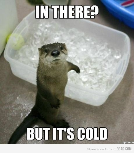 But it's cold.: Animals, Ice Bath, Stuff, Otters, Adorable, Funny Animal, Things