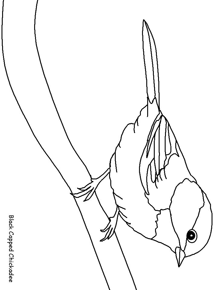 spring birds and flowers coloring pages birds 12 animals coloring pages coloring book. Black Bedroom Furniture Sets. Home Design Ideas
