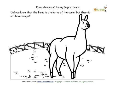 10 best Llama Storytime images