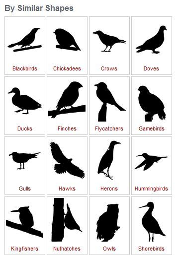 bird identification by shapes