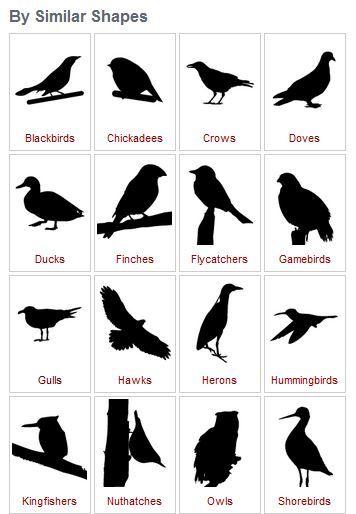 25+ bästa Bird identification idéerna på Pinterest