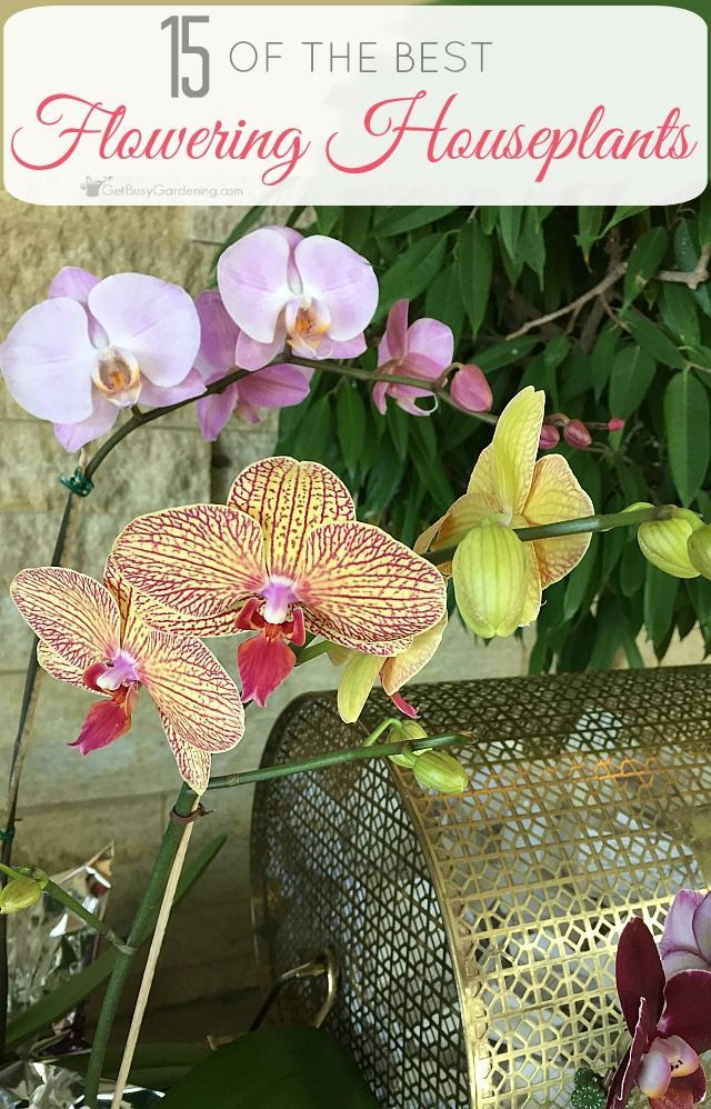 Who Doesn T Love Flowering Indoor Houseplants Here S A List Of 15 The Best That Are Easy To Grow And Will Bloom Year After
