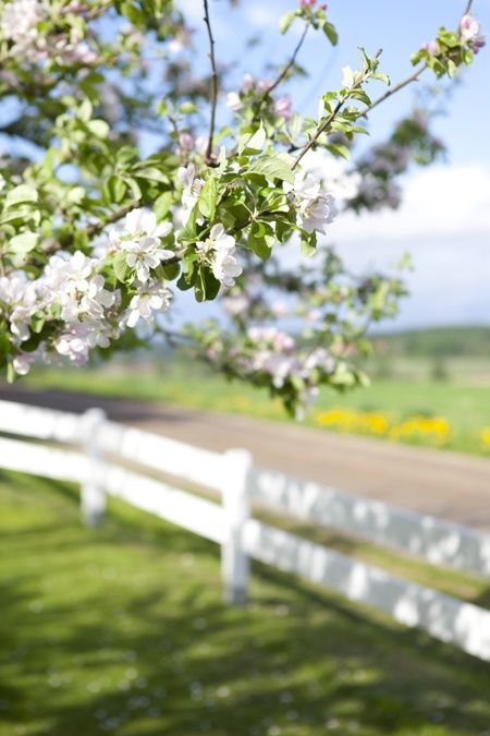 Green pastures and cherry blossoms always remind me of mom and pops house in the early spring.