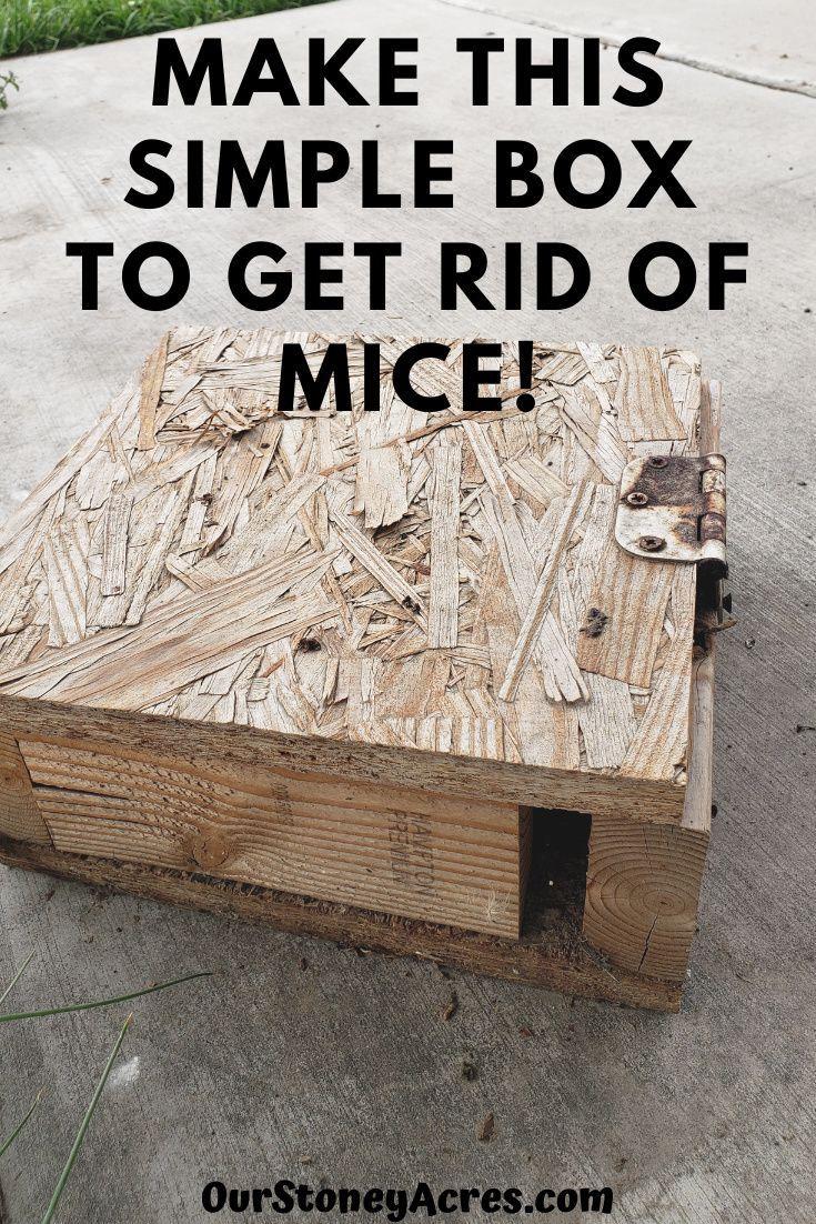 be513765c5e9ee3cf724f550152bc7d3 - How To Get Rid Of Mice In Compost Bin