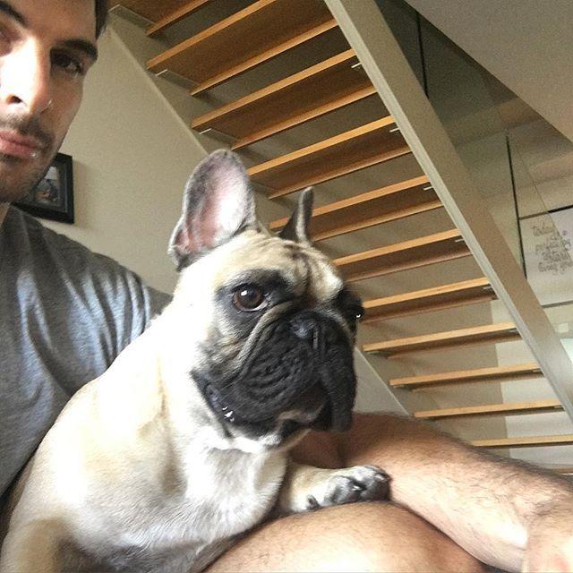 @alfie.thefrenchie loving grand designs #frenchie #frenchbulldogs #puppy #batdog #gymtime #granddesigns #tv #media #instapuppy #bulldog #french #fun #love #sydney #australia