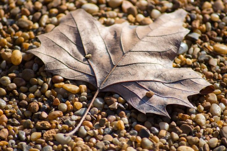 Brown leaf on the ground