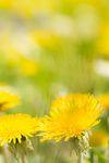 pixelio.de - Deine kostenlose Bilddatenbank für lizenzfreie Fotos