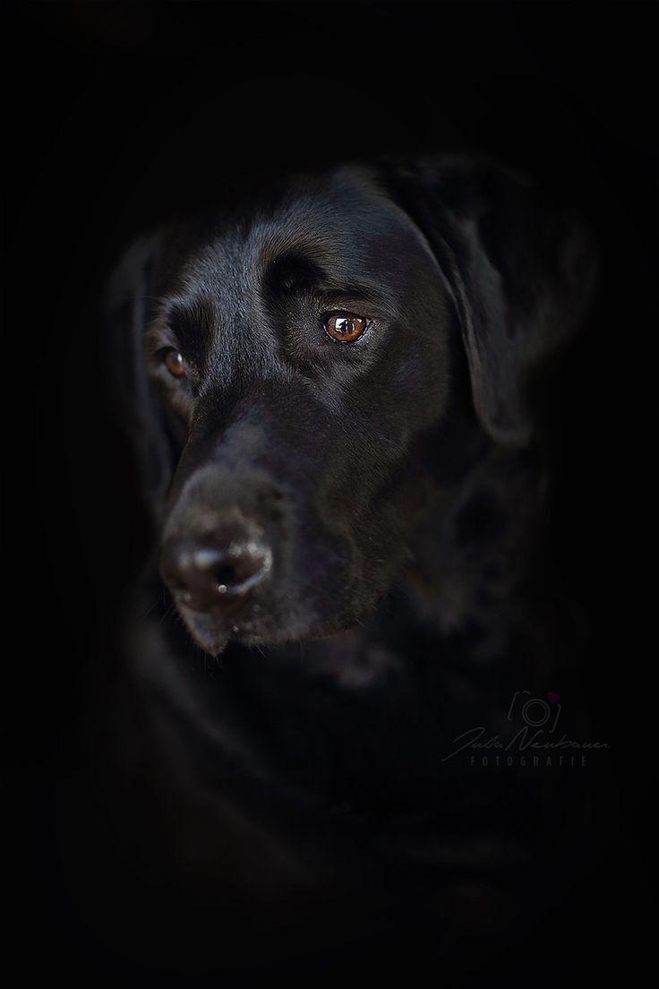 Hunde - Julia-Neubauer Fotografie