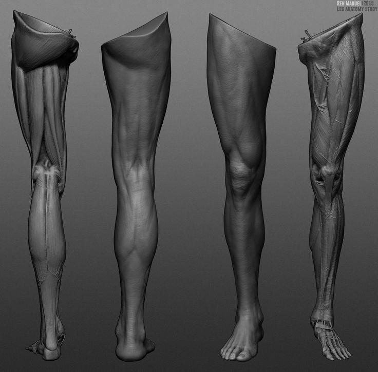 leg anatomy study., ren manuel on artstation at https://www, Human Body