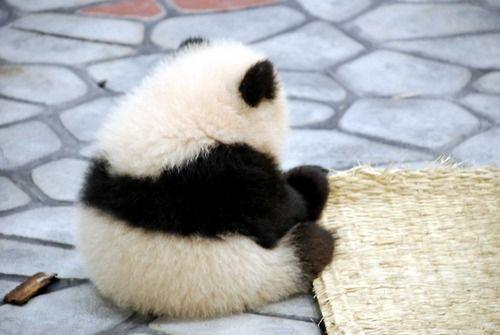 子パンダ。