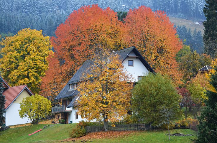 https://flic.kr/p/AWstRf | The unreal tree, Altglashutten, Black Forest, Germany