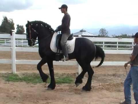 caballo bailador marquitos frisian - YouTube