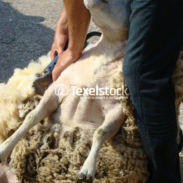 TexelStock.nl – Photo/Foto – Koop hier uw Texelfoto! Buy your TexelPhoto here!