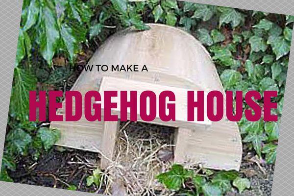 How To Make an Outdoor Hedgehog House