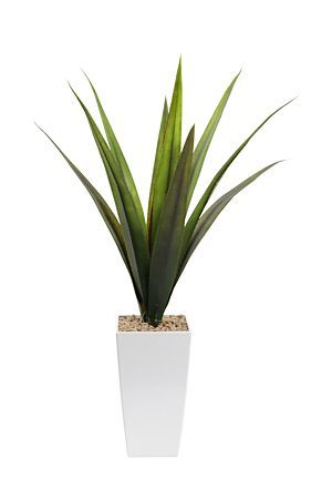 """This agave in a tall pot can be used to add height and freshness to any urban setting in your home or office.<div class=""""pdpDescContent""""><BR /><b class=""""pdpDesc"""">Dimensions:</b><BR />L13xW13xH73.5 cm</div>"""