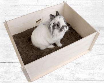 Bunny Buddelkiste  Kaninchen - Zwergkaninchen - Haltung - artgerecht