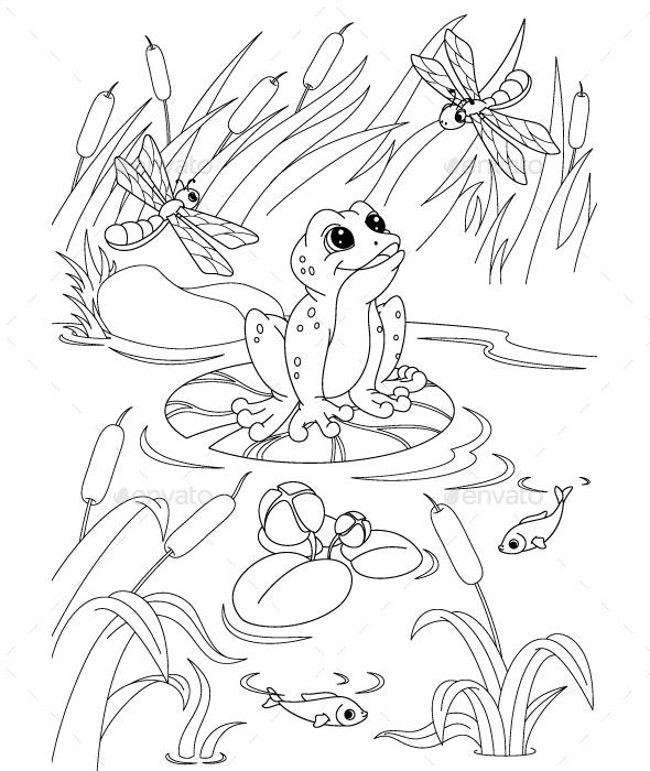 Pond Coloring Page By Platinka Graphicriver Frog Coloring