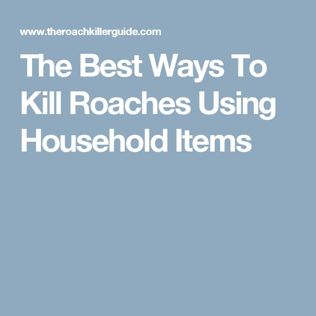 The Best Ways To Kill Roaches Using Household Items