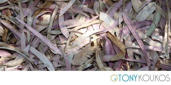 pile, leaves, texture, Tony Koukos, Koukos