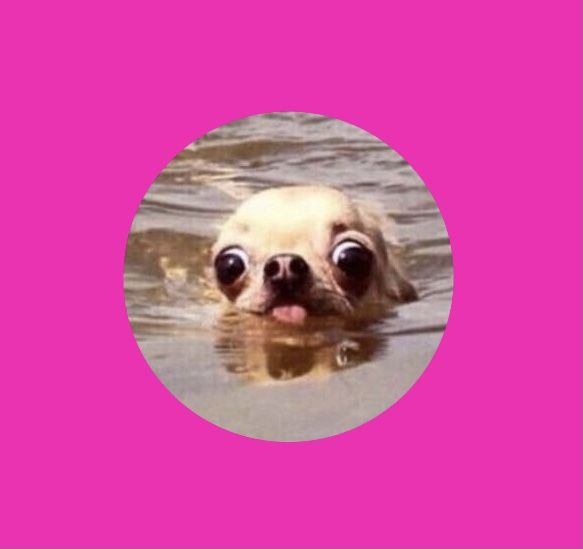 Funny Dog Meme Profile Picture Profile Picture Dog Memes Funny Dogs