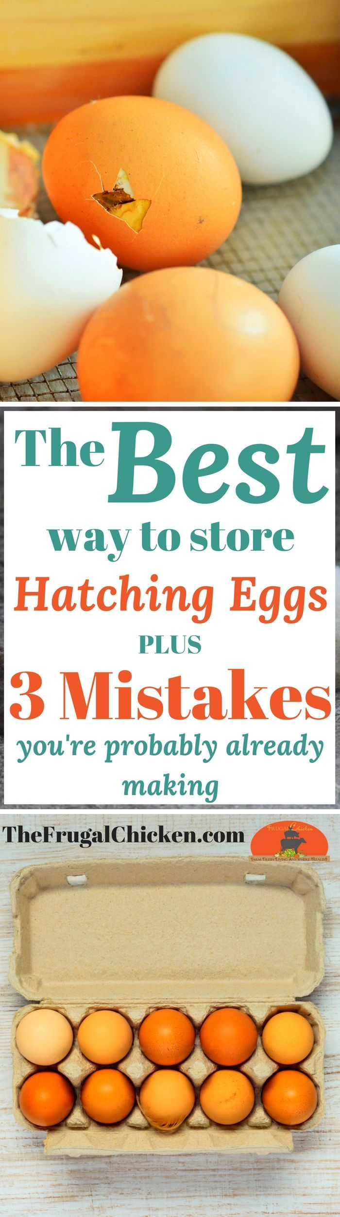 Chicken and duck hatching eggs should be stored a certain way. Here's exactly what to do so your eggs can hatch into chicks!